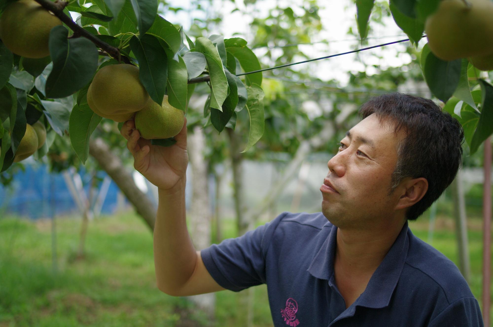 農繁期に集中する発送作業を、もっと素早く・効率よく - スズキ果物農園様